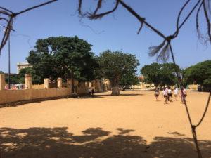un baobab cresce in mezzo ad un campo